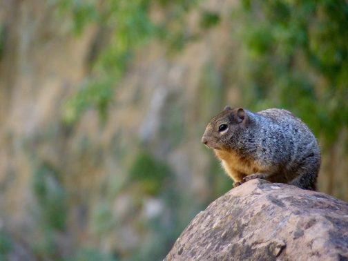 24 Habitat at Zion National Park