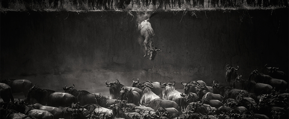 The great migration - 2014-09-29_282148_nature.jpg